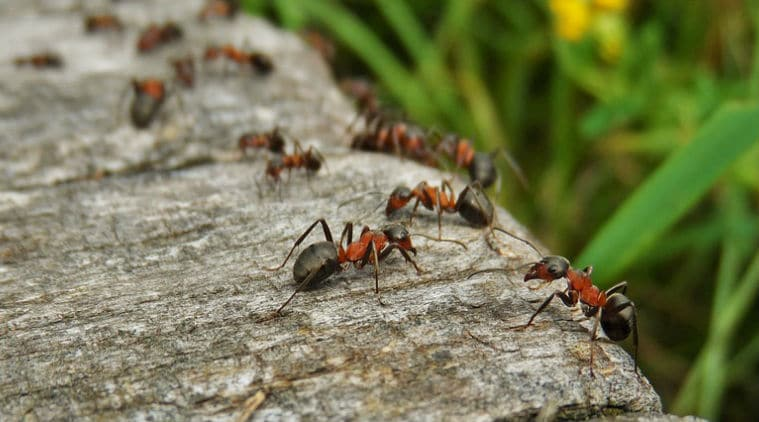 get-rid-of-ants-from-home